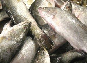 06.Vetki Fish
