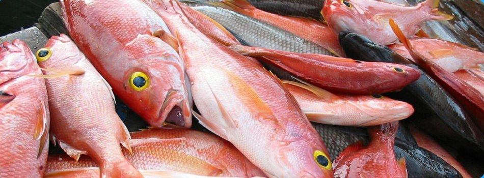White Fish-1